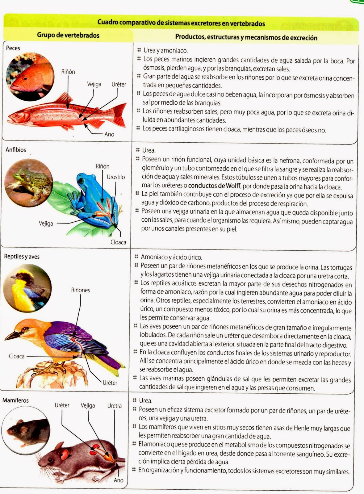 BIOLOGIA 701-702 :: Cienciasesunalocura
