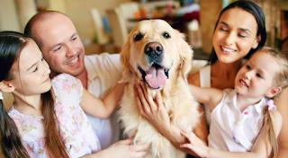 Έρευνα: Τα σκυλιά κάνουν καλό στην υγεία μας, διώχνουν την κατάθλιψη και δίνουν ουσία στη ζωή μας