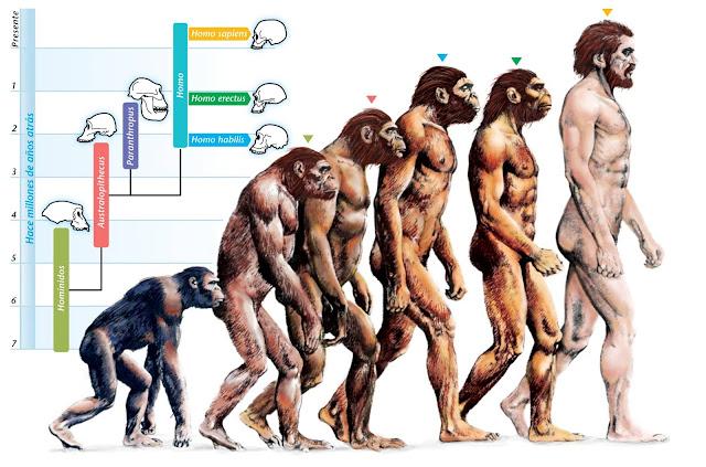 Evoluzione dell'uomo