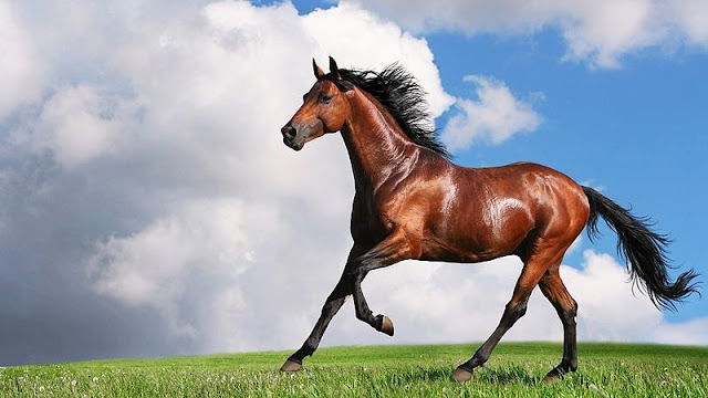🐎Beautiful🐎 Horse Photos Images And Pictures Free Download