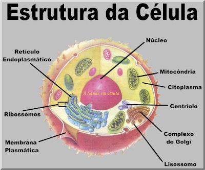Esquema da estrutura de uma célula eucariontes animal