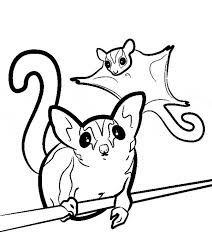 Adorable Sugar Glider Coloring Pages For Print