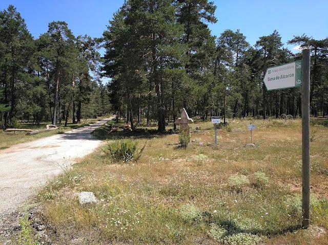 Sima de Alcorón, desvío carretera