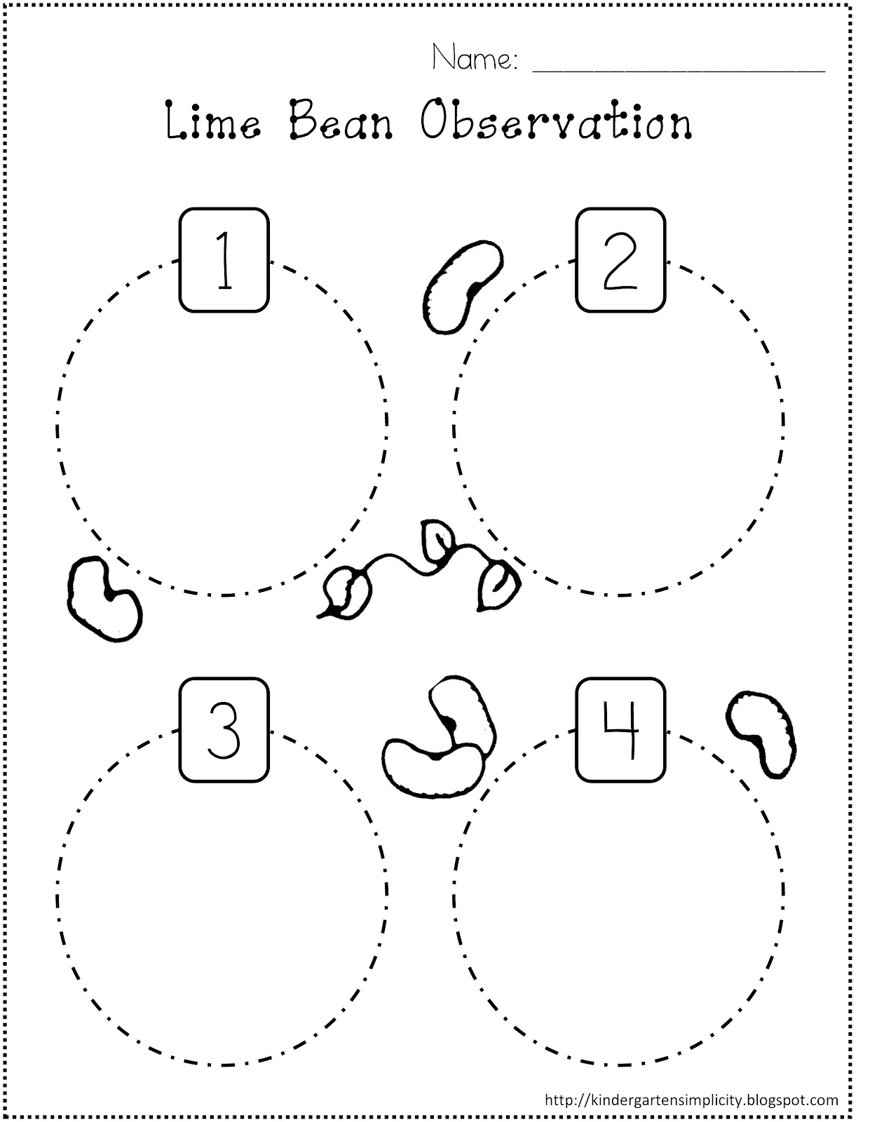 Life Cycle Of A Bean Plant For Kids Worksheet