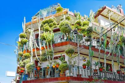 Casa cactus a Calella