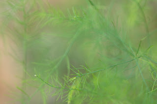 Soft, delicate green leaves of nature at the beautiful Hill Country Water Gardens in Cedar Park, Texas