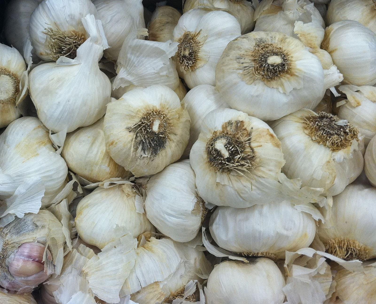Grow Herbs In Kitchen How To Grow Garlic In Pots Garden How
