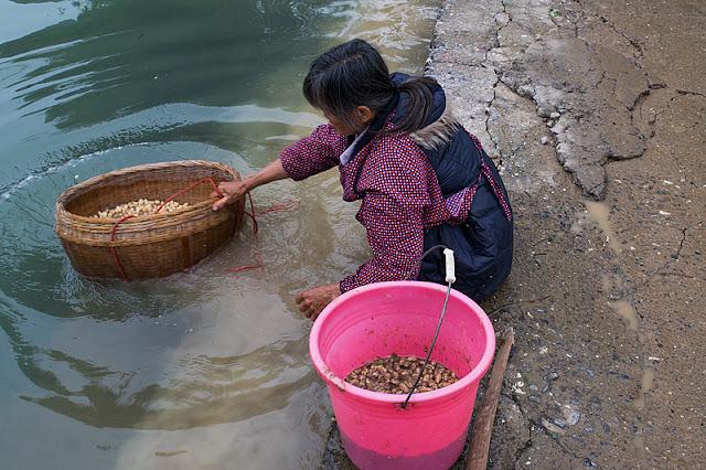 Femme lavant des cacahuètes dans une rivière