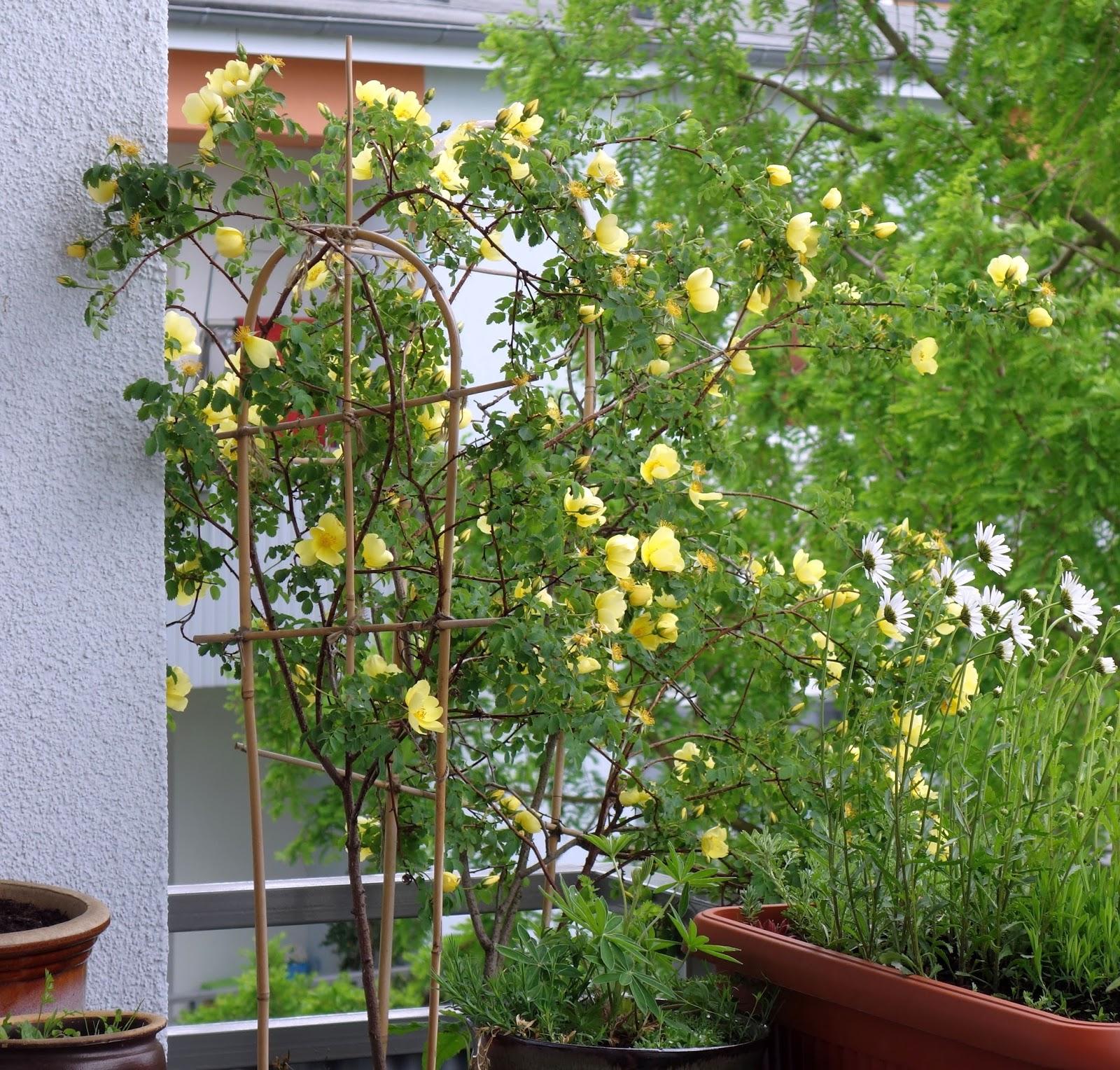 wildblumen auf dem balkon. Black Bedroom Furniture Sets. Home Design Ideas