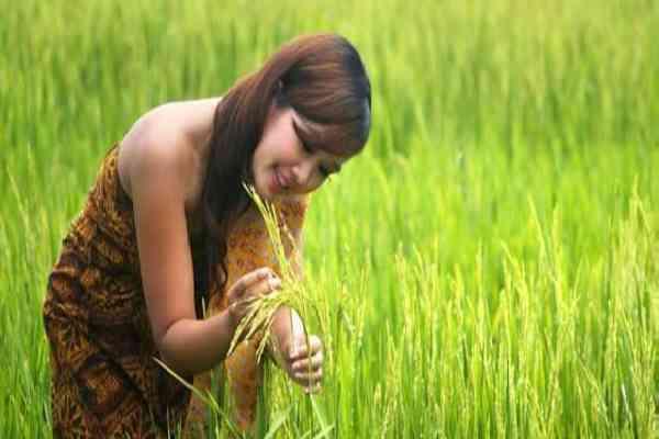 Peluang Usaha di Bidang Pertanian Modern Yang Menguntungkan