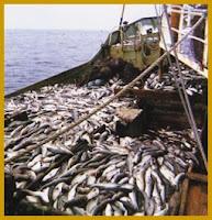 Sobrepesca codiciosa