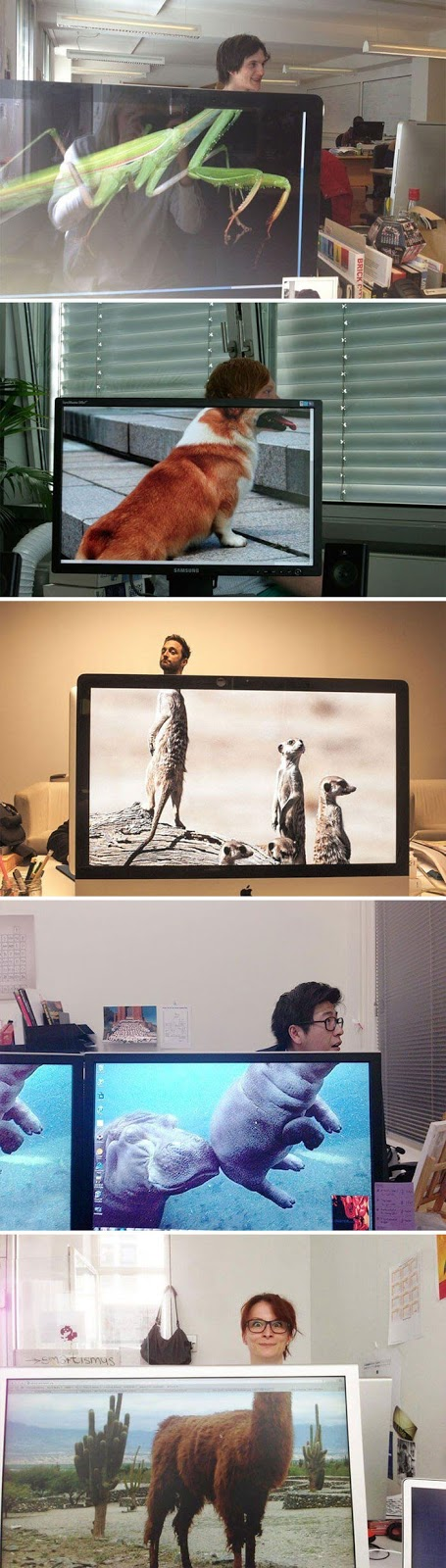 28 Creatively Hilarious Desktop Wallpapers We Wished We Had Thought Of First - Coworkers Adding Heads To Animals On Desktop Background