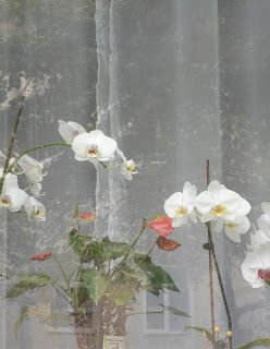 White orchids in Dresden, vertical photo ©2015 Tina M. Welter