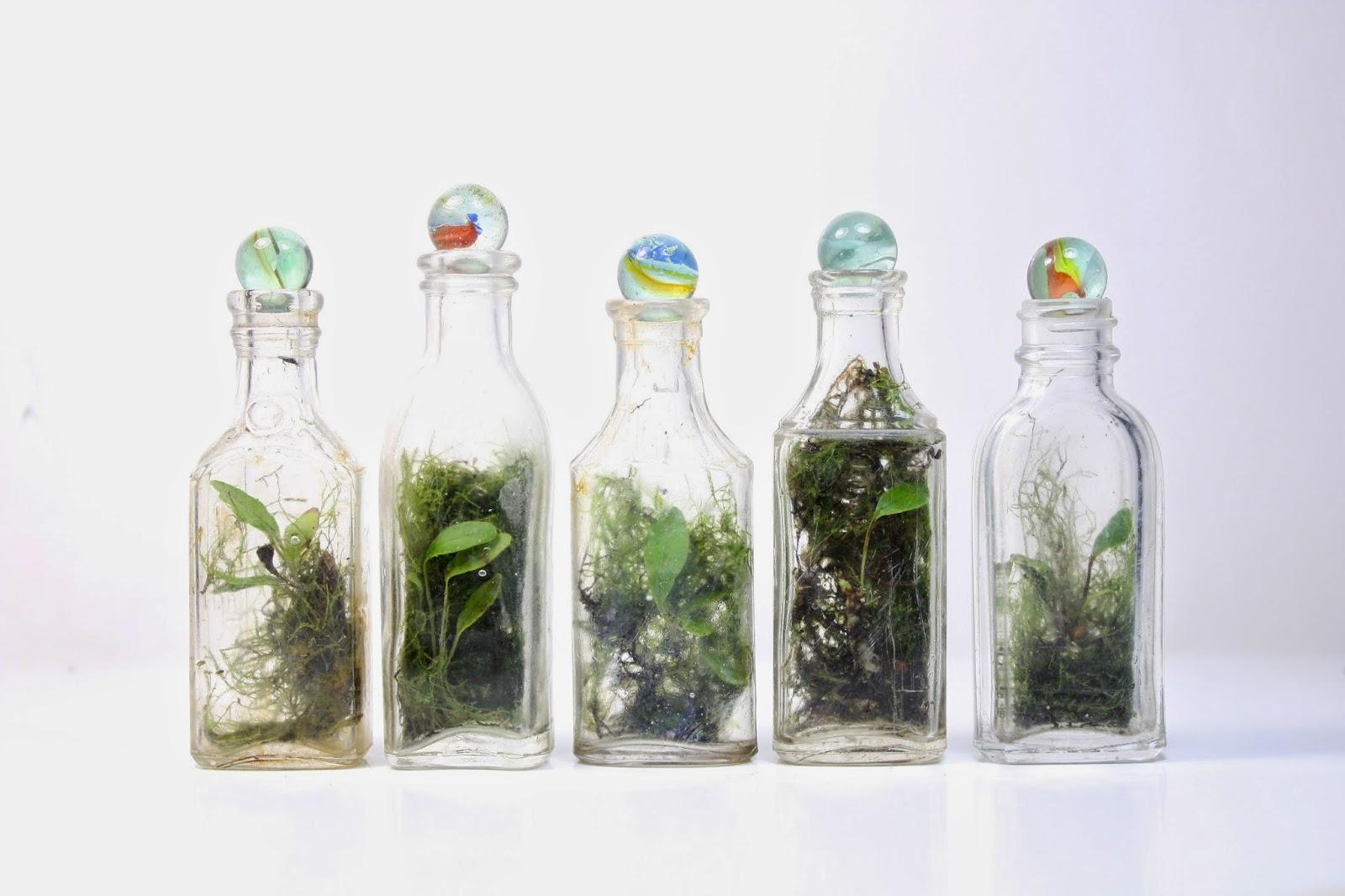 terrarium-sise-bilye-dekor-botanik