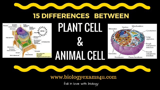 Difference between Plant cell and Animal cell (15 Differences)