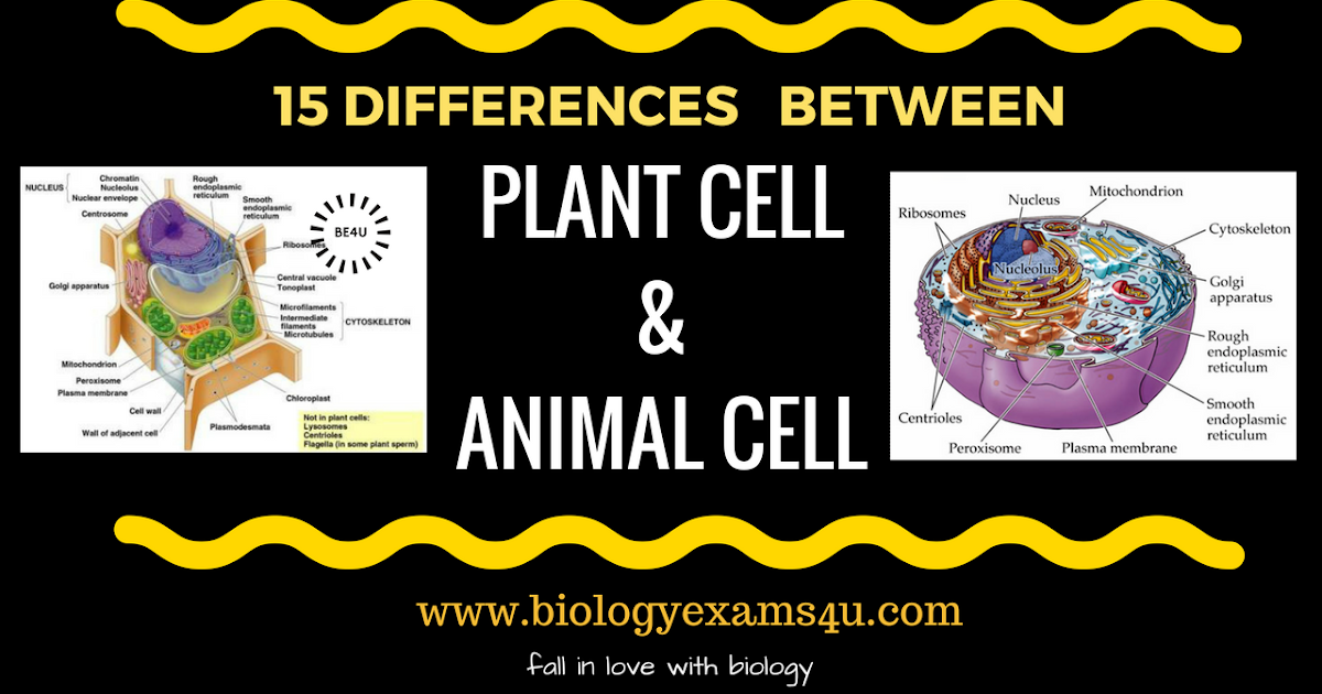 Difference Between Plant Cell And Animal Cell 15 Differences