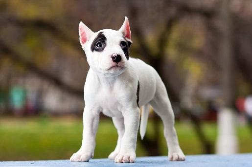 Fakty i mity o psiej agresji