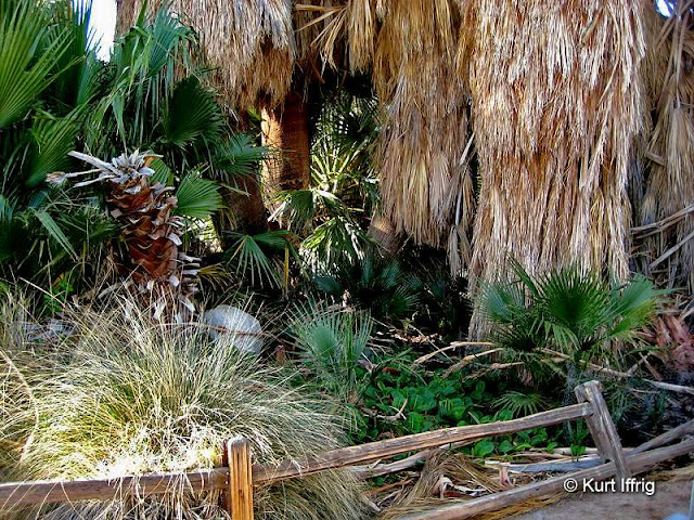 The Oasis of Mara was once home to Serrano and Chemehuevi Indians.