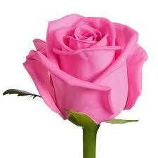 mawar pink toko bunga lamongan22