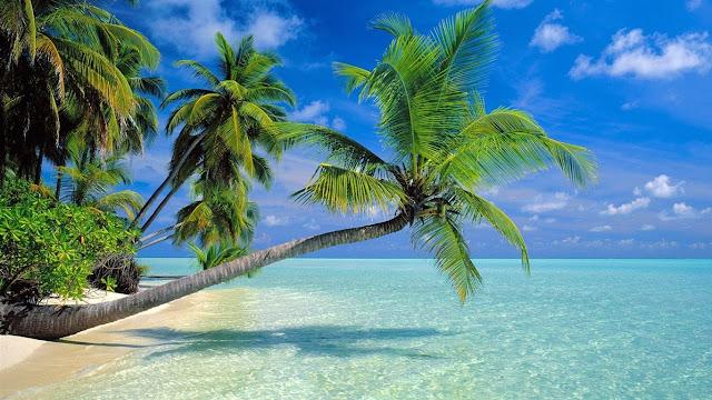 właściwosci odżywcze drzewa życia - palmy kokosowej