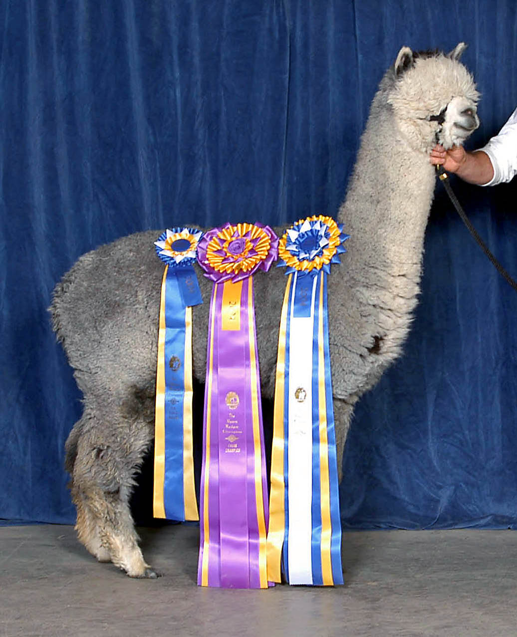 Alpaca Overview: Alpaca Tidbits & Fun Facts