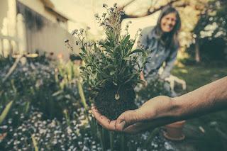Le jardinage en EHPAD.