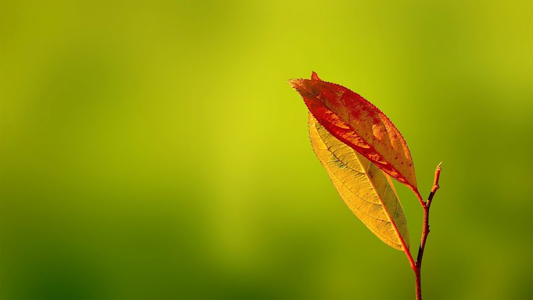 Leaves Macro HD Wallpaper 12