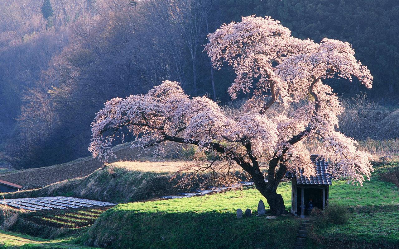asian beauty place jpg 422x640