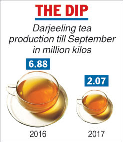 104-day statehood agitation strike losses Rs 200cr on Darjeeling tea industry
