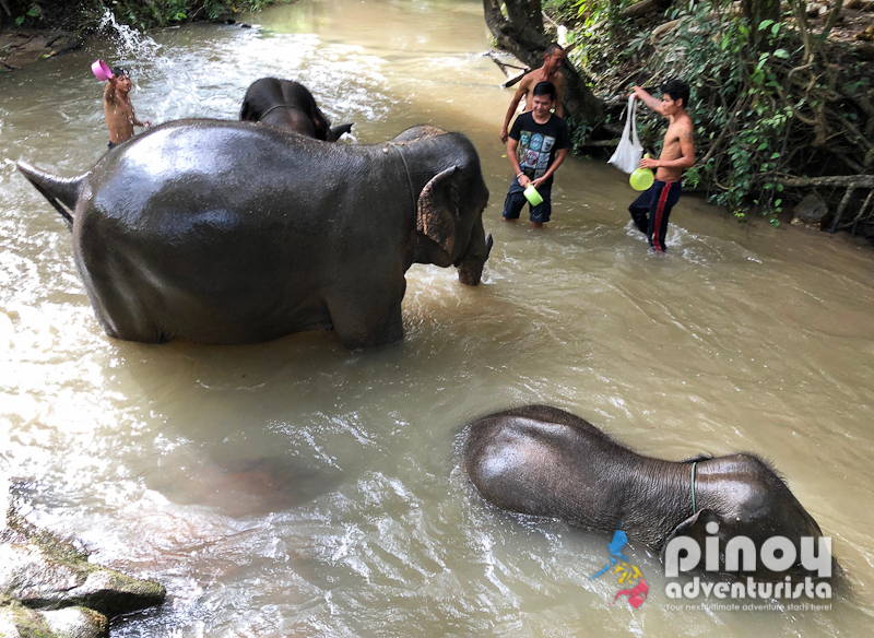 Elephant Pride Sanctuary Day Care in Chiang Mai