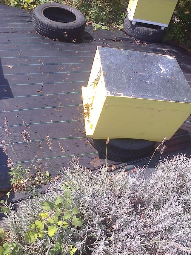 Βούισμα στην είσοδο της κυψέλης, συνωστισμός από μέλισσες ξαφνικά: Γνωρίζει κανείς το γιατί;