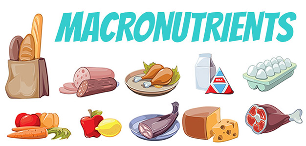 Food and macronutrient combinations that support weight loss Programs