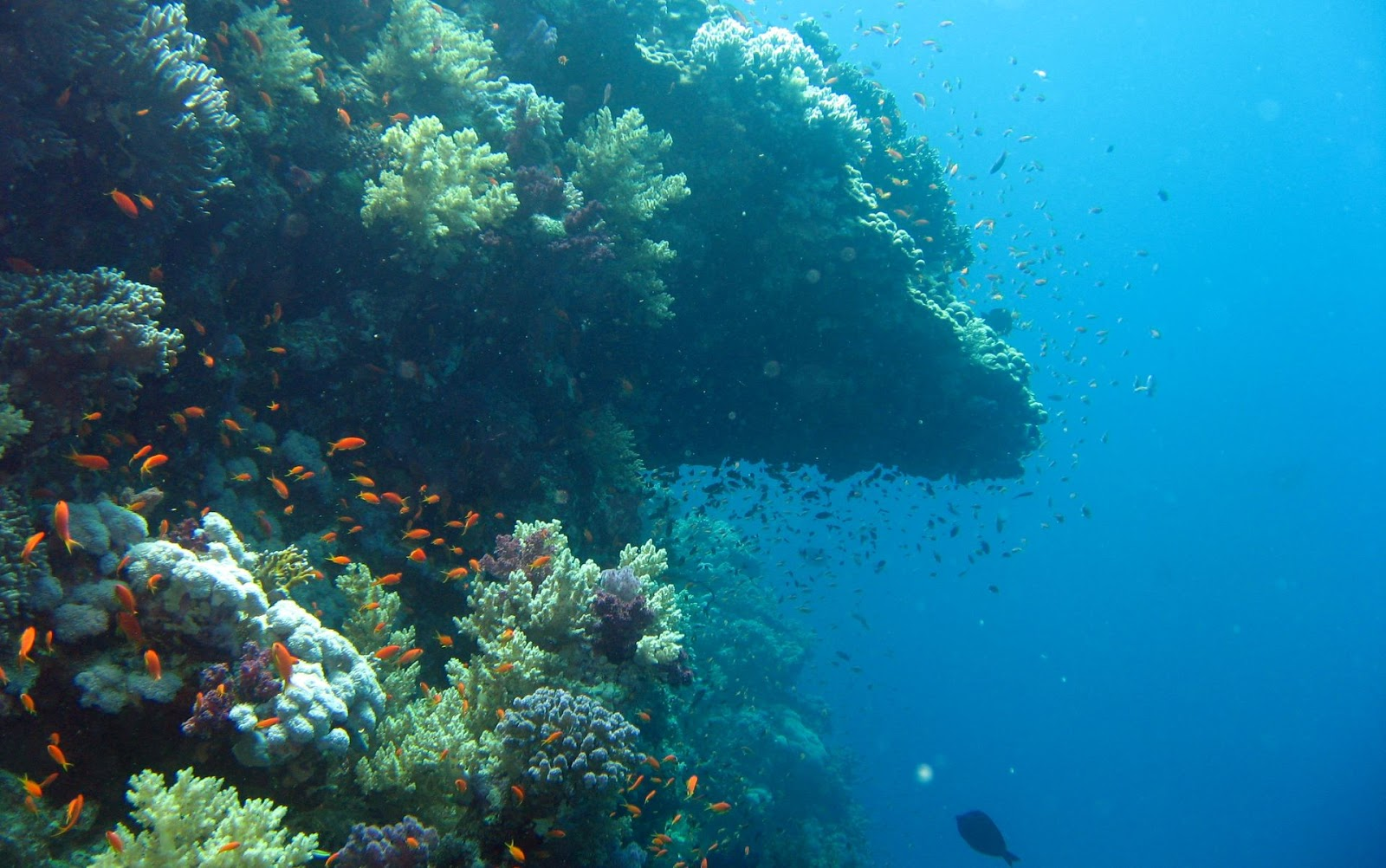 Scuba Diving destinations in India
