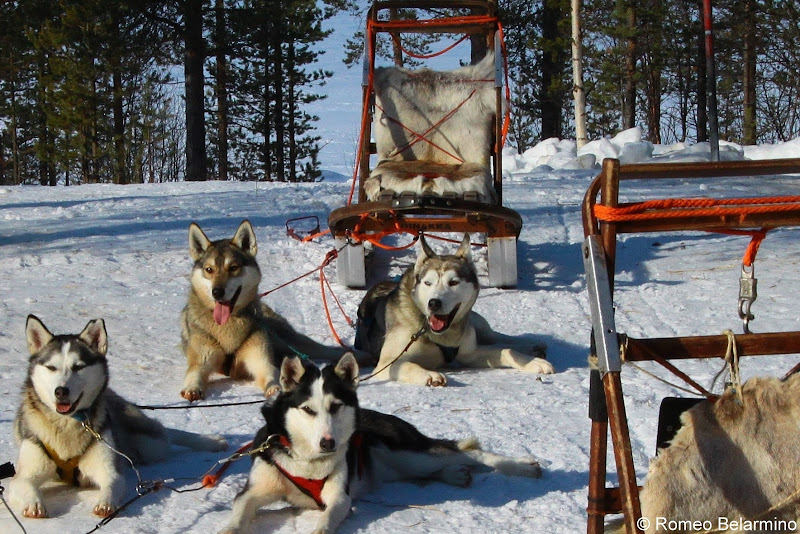 Taking a Break Dog Sledding Outdoor Winter Activities Sweden's Lapland