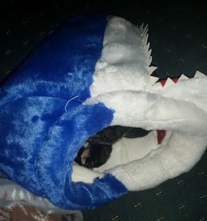 shark head 2