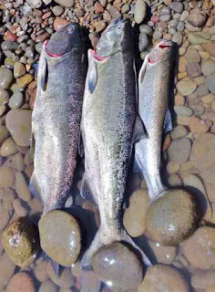 Rogue-river-salmon-and-steelhead