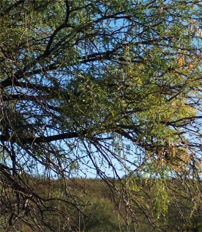 Future plants by randy stewart mesquite for Randy stewart builder