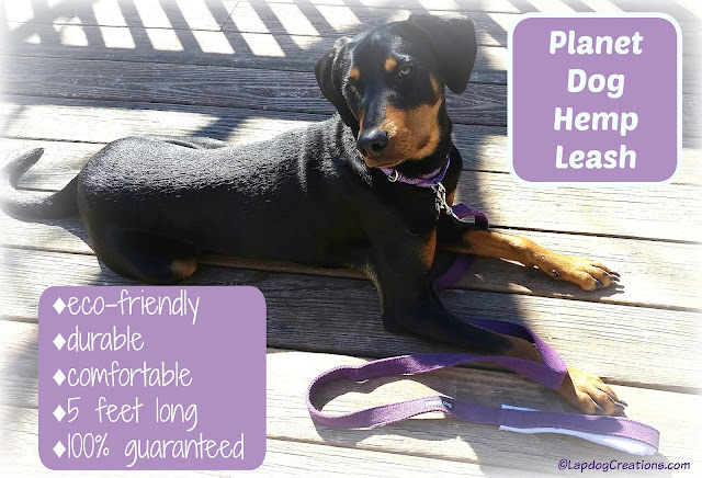 Penny is ready for a walk with her #PlanetDog Hemp Leash #ecofriendly #dogwalk #rescueddog #adoptdontshop #LapdogCreations ©LapdogCreations
