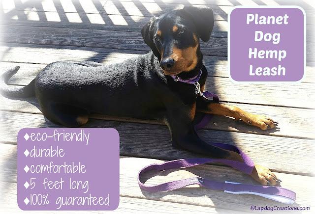 Penny is ready for a walk with her #PlanetDog Hemp Leash #ecofriendly #dogwalk #rescueddog #adoptdontshop #LapdogCreations ©LapdogCreations