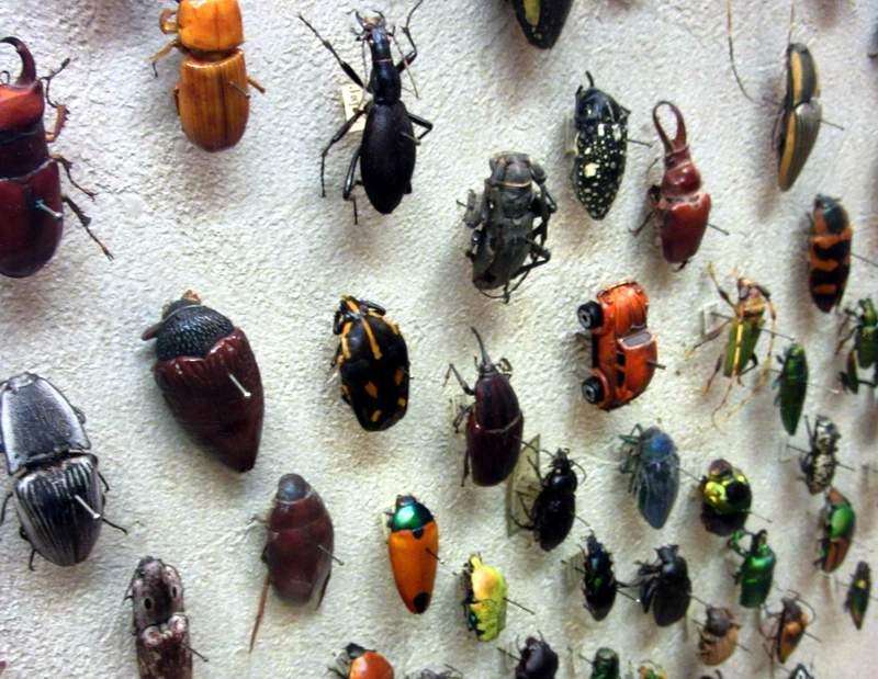 A Voice From The Rustbelt Meet The Beetles
