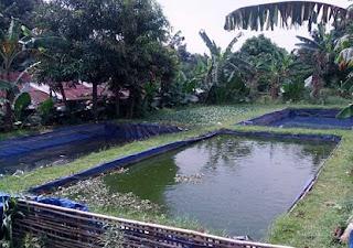 cara budidaya ikan,ternak ikan gabus di kolam terpal,nila di kolam terpal,lele kolam terpal,patin di kolam terpal pdf,gurame di kolam terpal,belut kolam terpal,