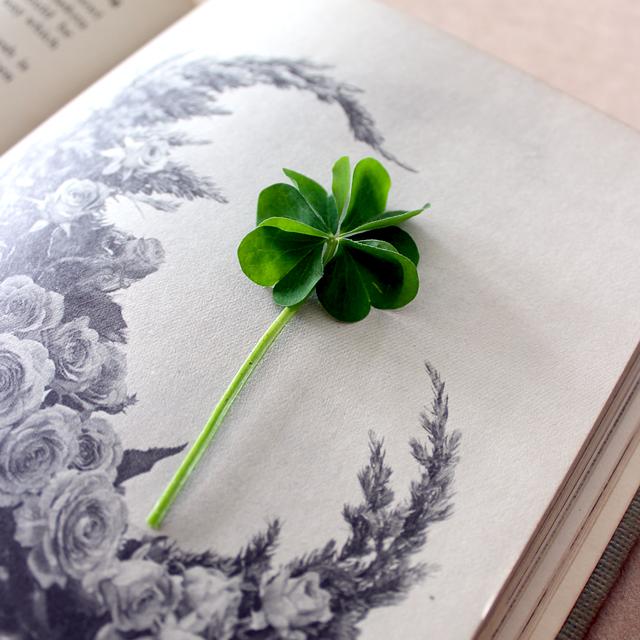 Six leaf clover - pixiehill.com