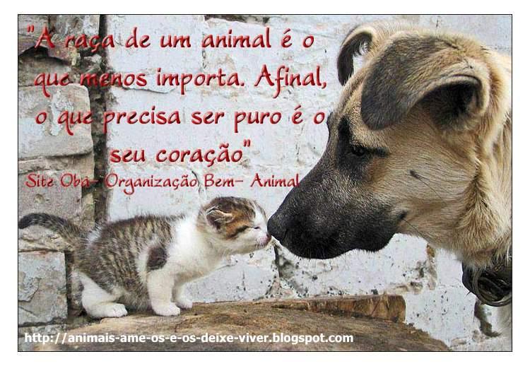 Frases Com Animais De Estimação Para Facebook: Frases Com Animais Para Facebook