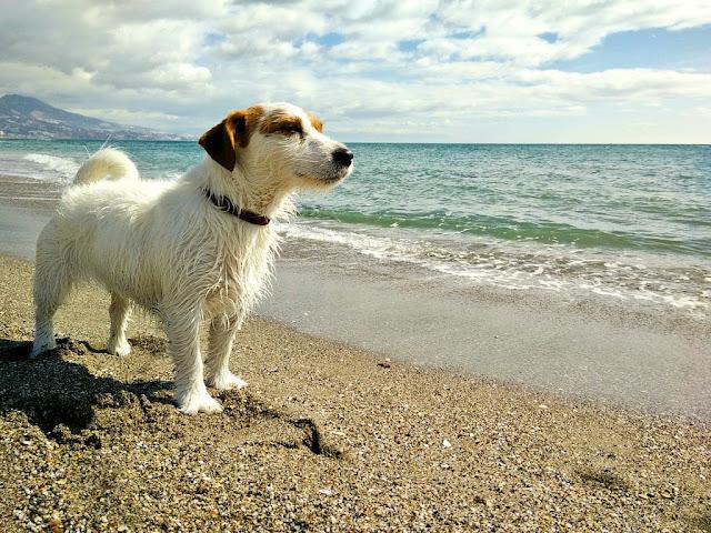 Amy mirando al horizonte en la playa de Fuengirola