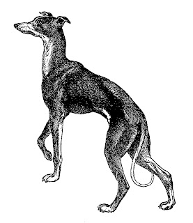 dog greyhound clip art illustration artwork image digital