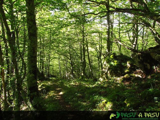 Hayedo del Valle de la Foix