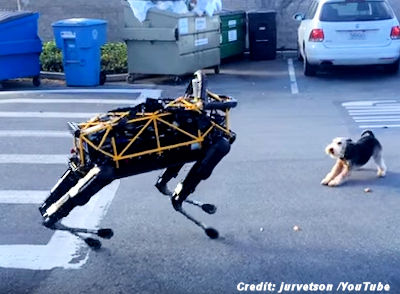 Robot Dog Plays with Real Dog