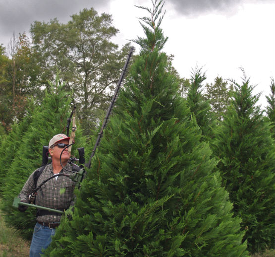 JeffCo Gardener: Real Christmas Tree Industry Needled By