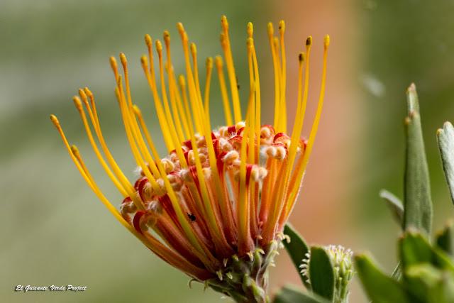 Flores Invernaderos de la Bambouseraie en Cévennes, Francia por El Guisante Verde Project