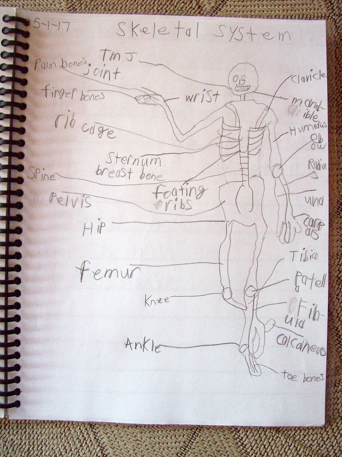 For Year 7, Riley Used A Variety Of Books Suggested From Ambleside Online,  As Well As A Human Anatomy Book Of Her Choice And A Couple Of Nature Books  Of My